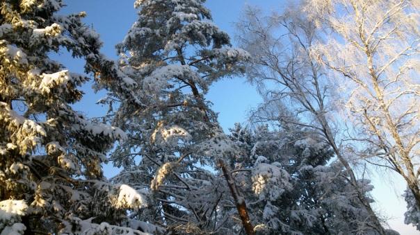 vall-drzewa-z-wyciagu