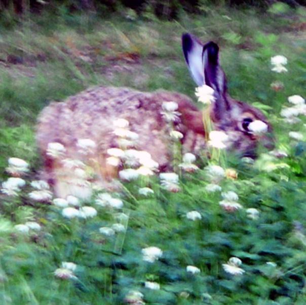zajaczek-sniadaniowy
