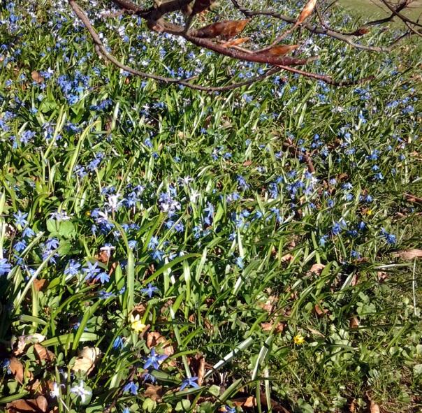 wiosna-niebieska