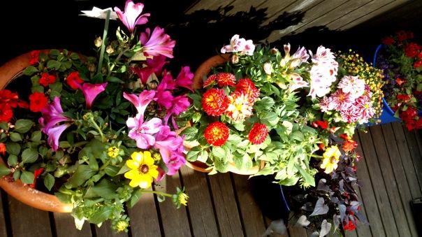 balkon-kwiatowy