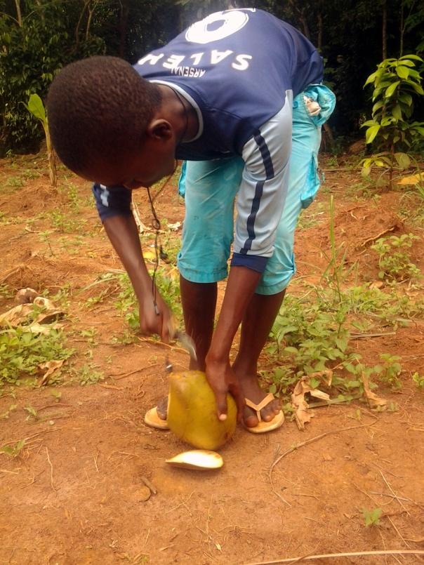 otwieranie-orzecha-kokosowe