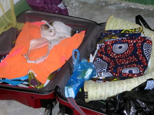 kocik-w-walizce